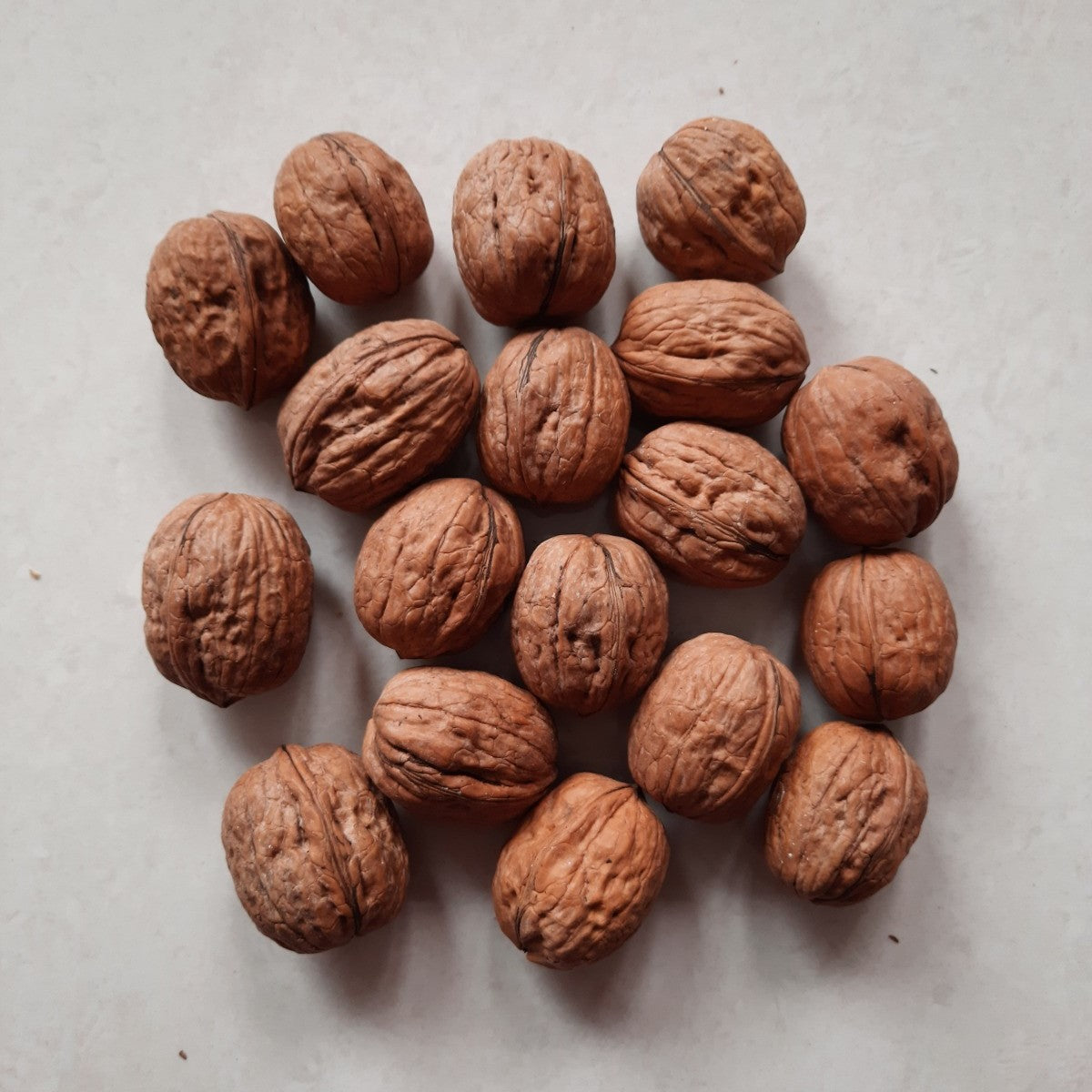 walnuts - Untamed Earth