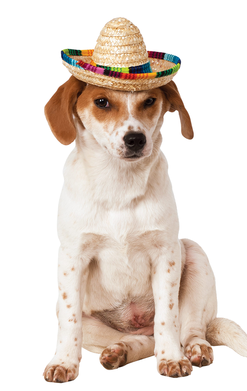 Sombrero Hat Dog Costume