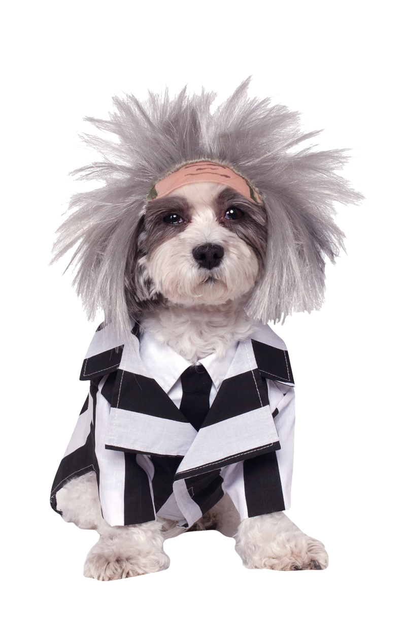 Beetlejuice Halloween Dog Costume