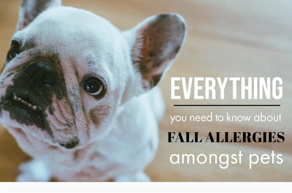 EVERYTHING YOU NEED TO KNOW ABOUT FALL ALLERGIES AMONGST PETS