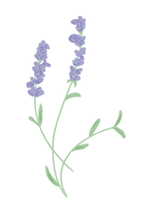 Nameco Lavendel Illustration