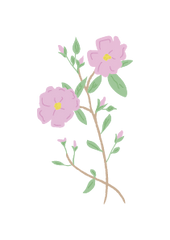 Nameco Wildrose Illustration