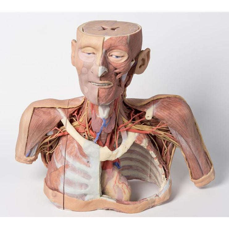 3D Printed Anatomy Models