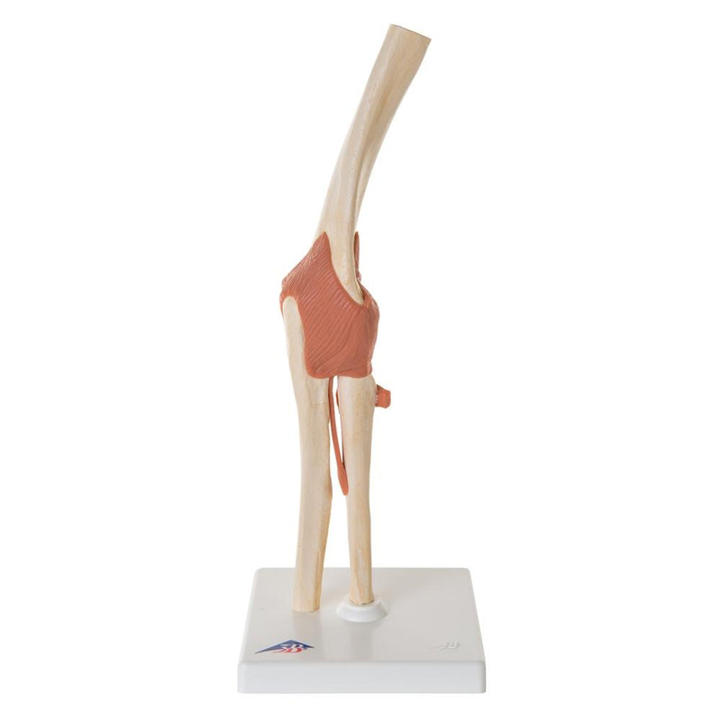 Deluxe Functional Elbow Joint Model - Includes 3B Smart Anatomy