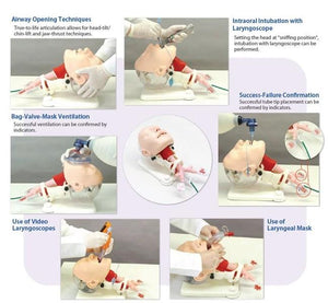 Difficult Airway Management Demonstration Model