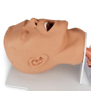 Economy Adult Airway Management Trainer with Board