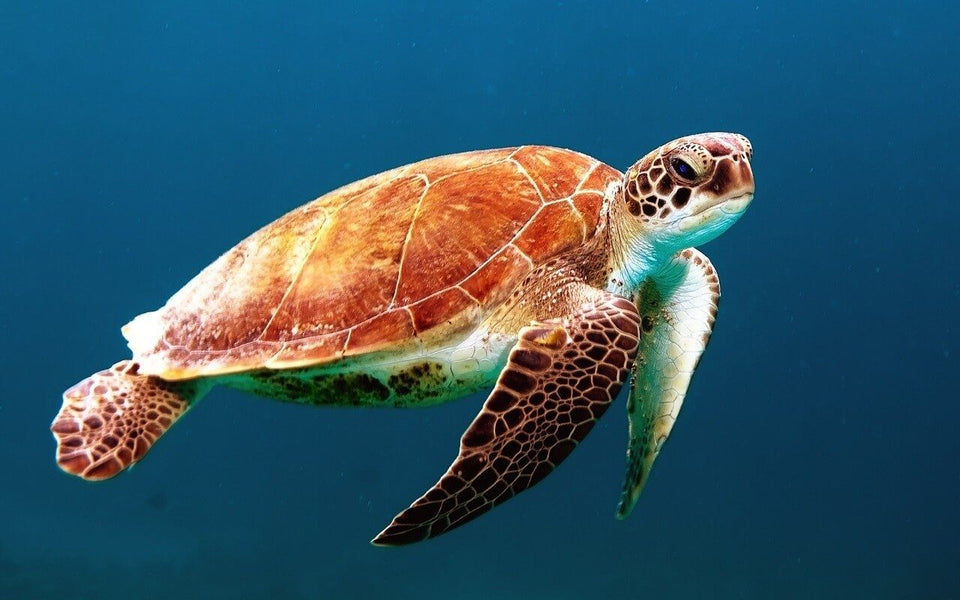 sea turtle swimming in the deep ocean