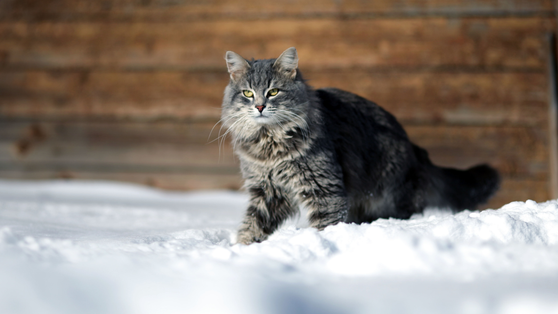 Protecting cats against dampness