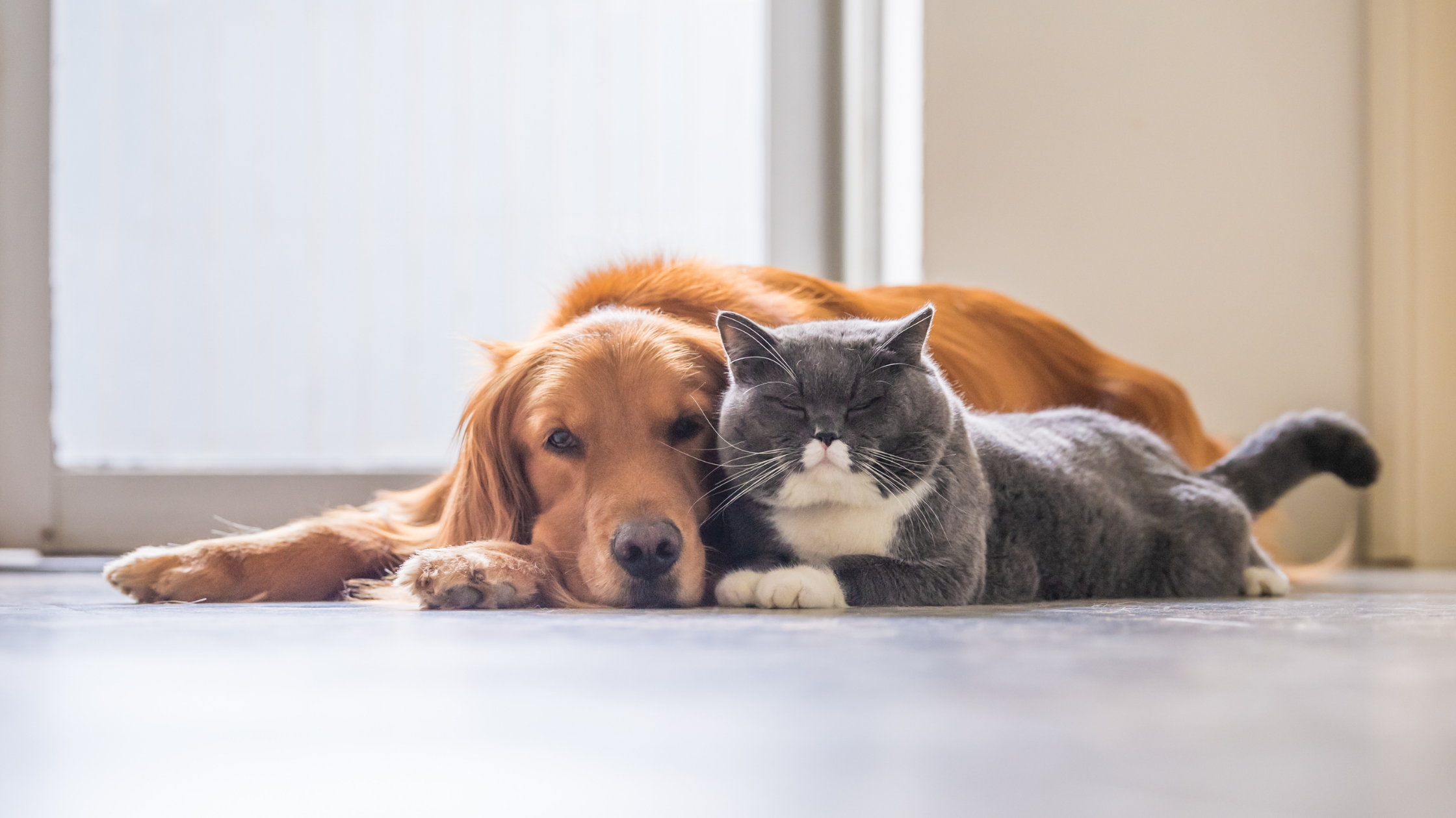Cats Live Longer than Dogs