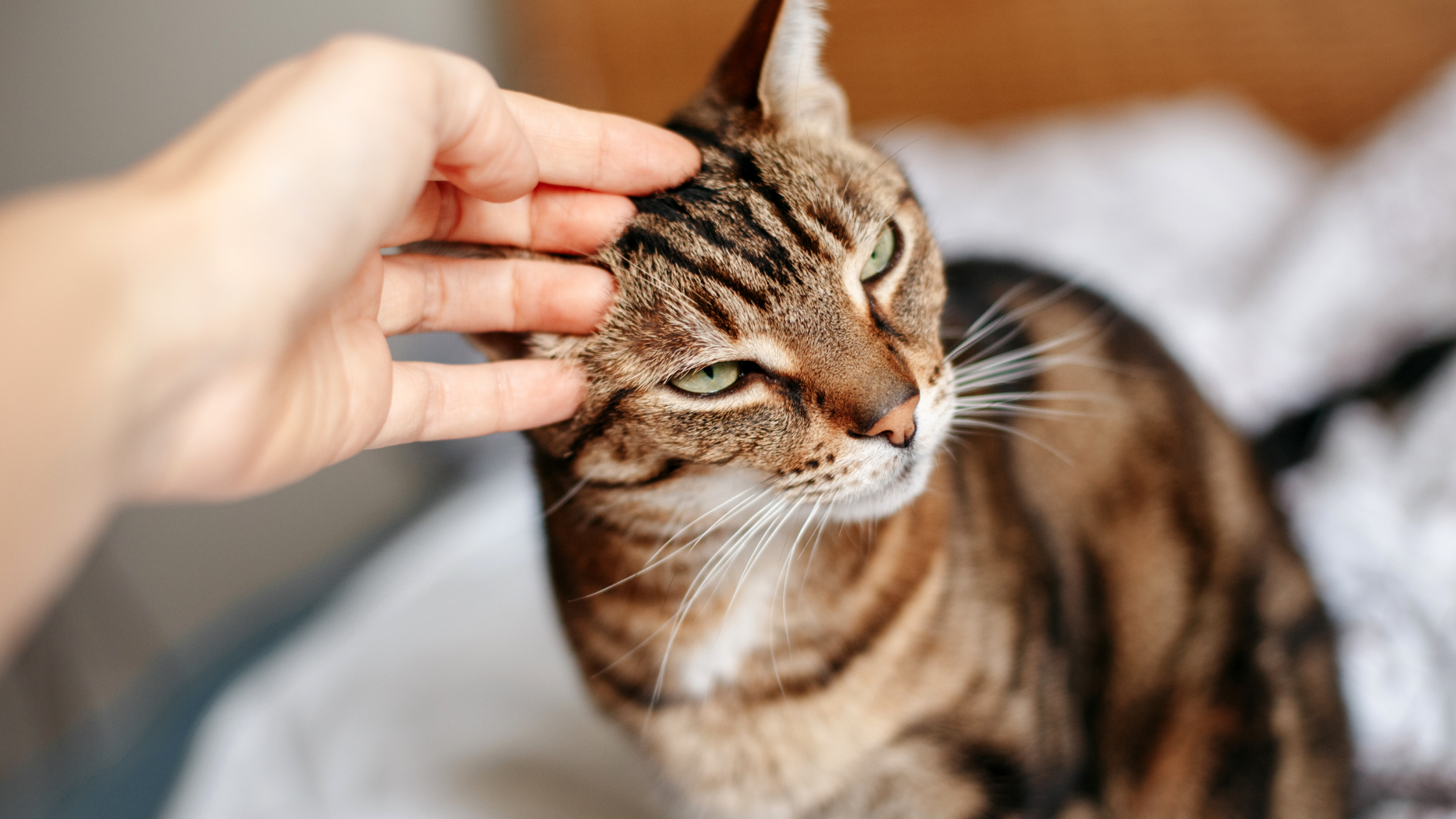 Taking On Cats Is Good For Your Mental Health