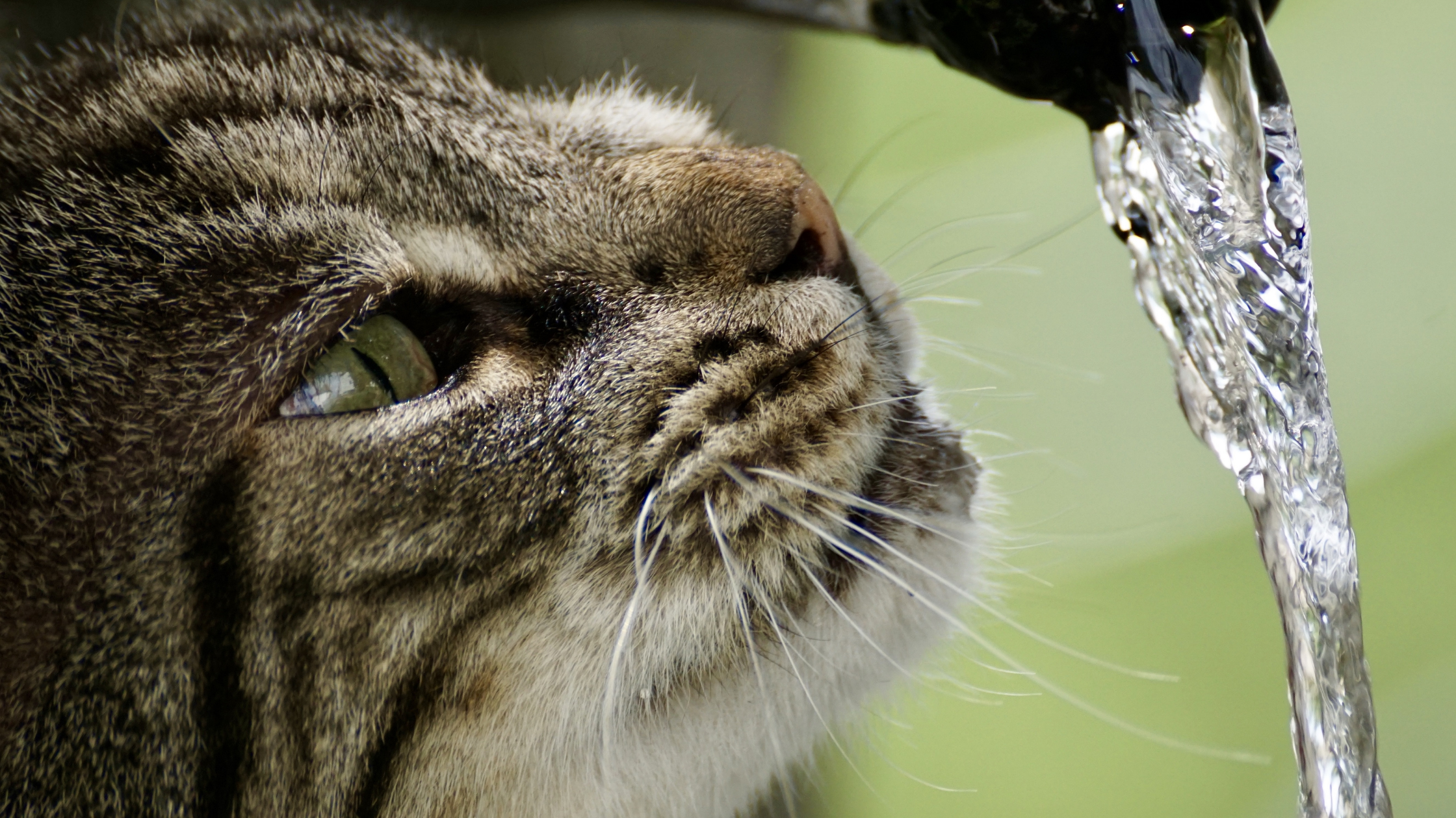 What causes dehydration in cats