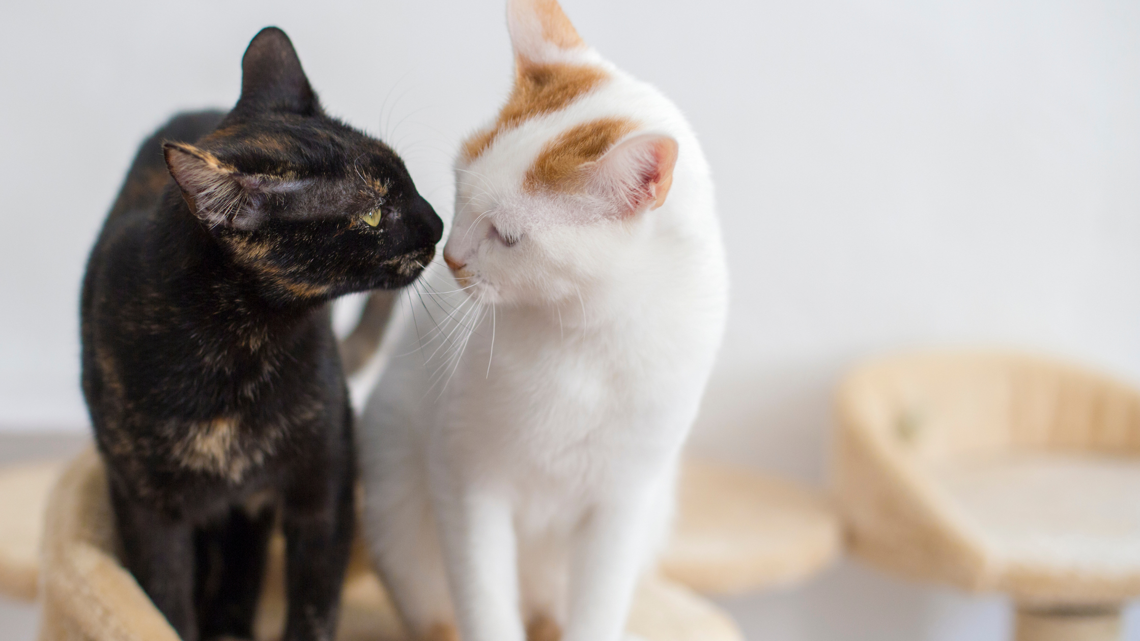 You'll Save More Than One Life If You Adopt A Cat
