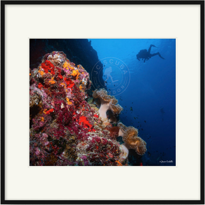 Wall Diver, the Maldives Premium Framed Print