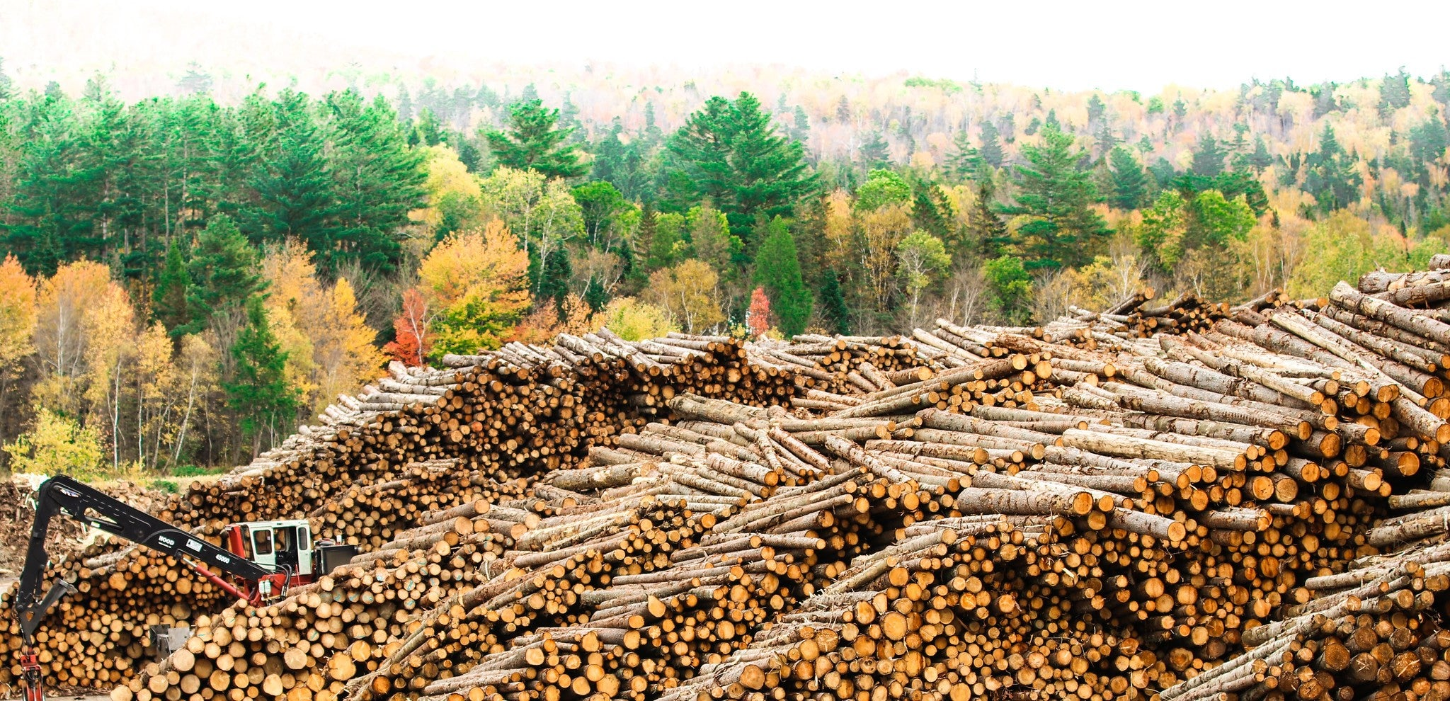 Using Wood for Good – How Timber Can Help Fight Climate Change