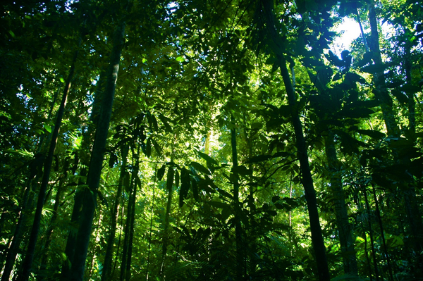 Rainforest – Photo Credit: Ben Britten (https://www.flickr.com)