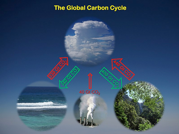 Technical Note - How do Trees Store Carbon?