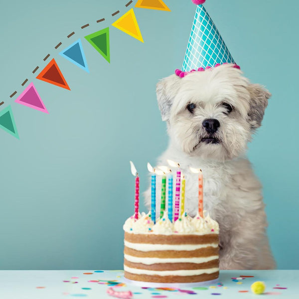 5 FUN WAYS TO CELEBRATE YOUR DOG'S BIRTHDAY!