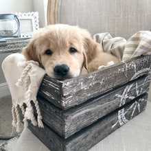 Load image into Gallery viewer, Puppy Box