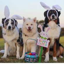 Load image into Gallery viewer, Easter Dog Gift Box