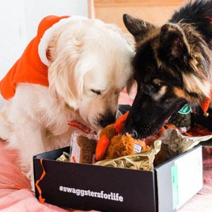 Christmas Gift Box for Dogs | Christmas Presents | Golden Swag