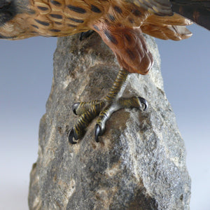 Cast Bronze Kestrel