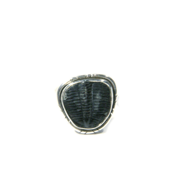Trilobite Fossil Ring | Sterling Silver 6 7 8 9 | Light Years Jewelry