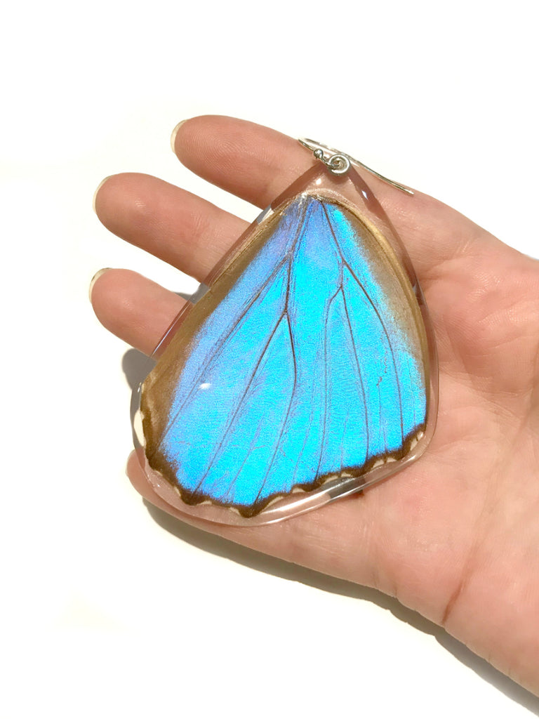 Giant Blue Morpho Butterfly Wing Earrings | Sterling Silver | Light Years