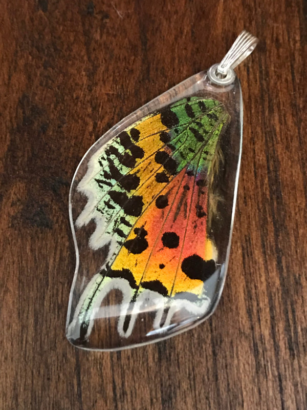 Sunset Moth Butterfly Wing Pendant | Silver Handmade USA | Light Years