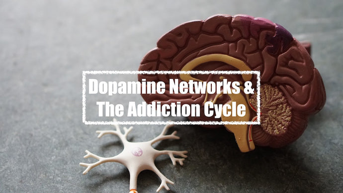 Dopamine Networks & The Addiction Cycle