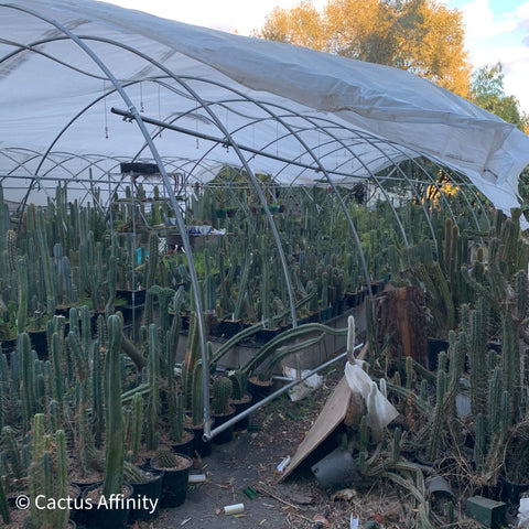 side view of cactus greenhouse