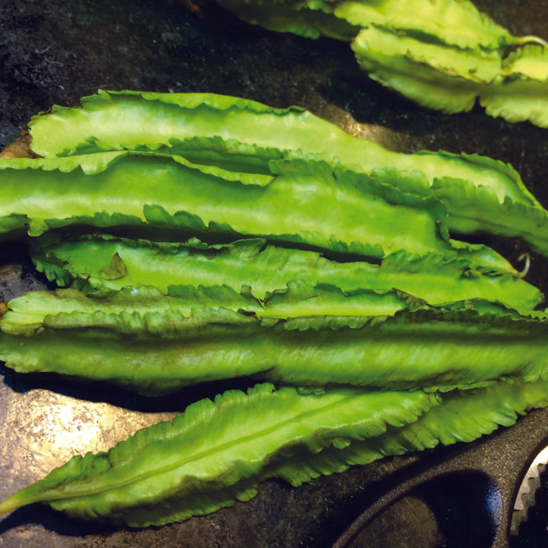 Organic Winged Beans Seeds - Open Pollinated