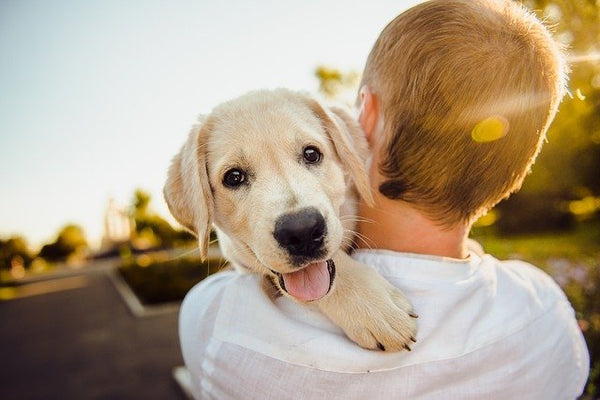 Happy dog rescued and carried by his owner