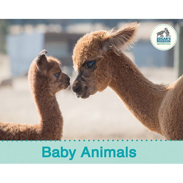 Baby Animals - Edgar's Mission