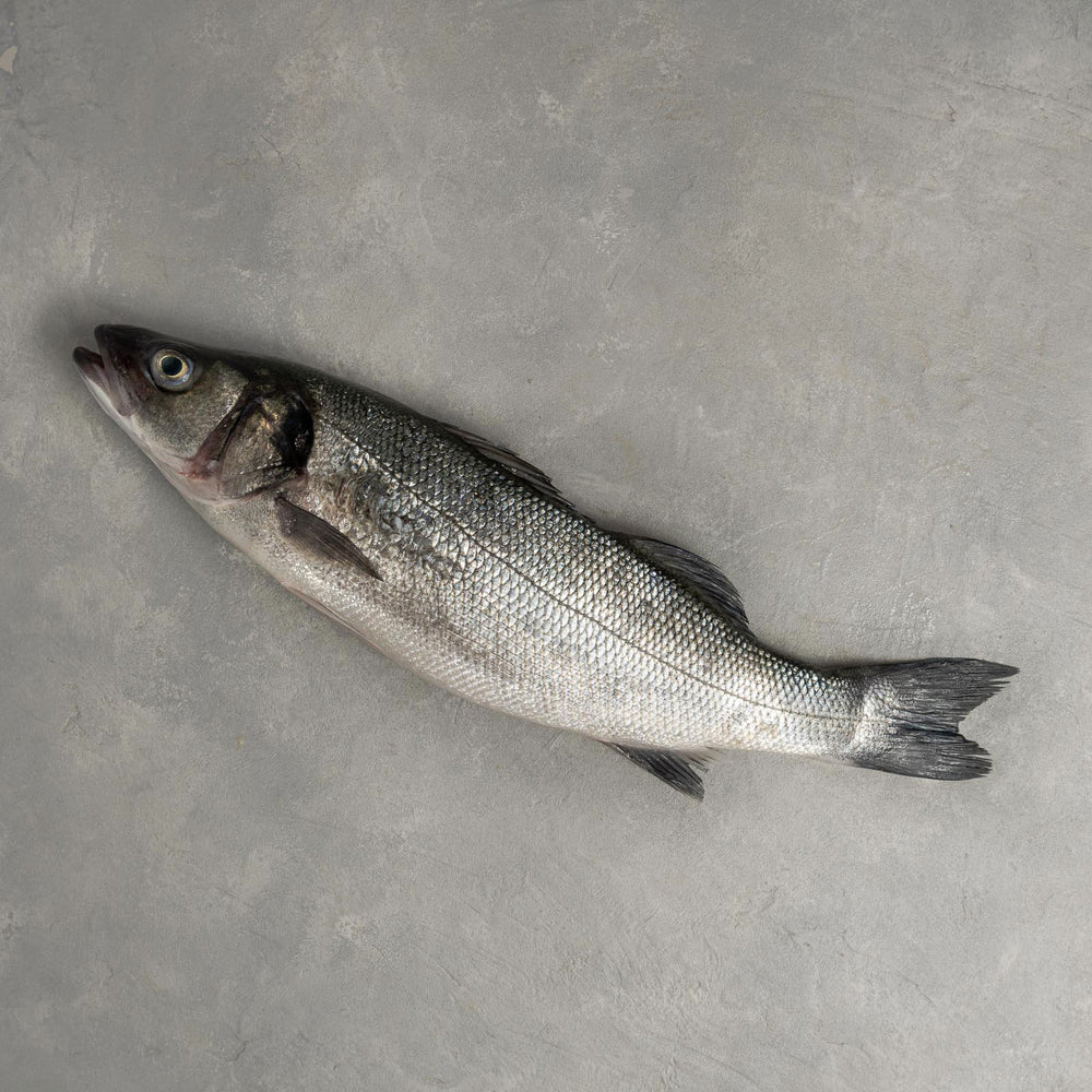 Load image into Gallery viewer, Bronzino Whole Fish (Farm Raised)