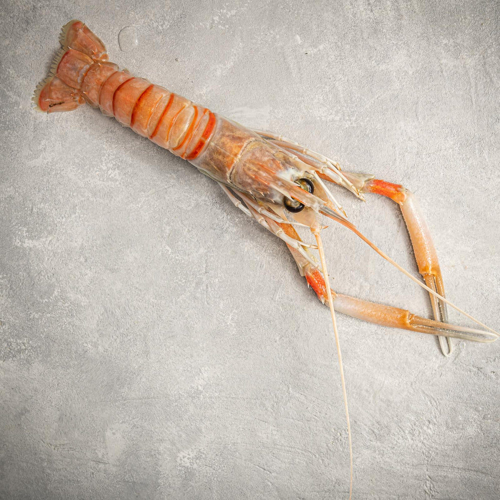 Load image into Gallery viewer, Langostino close up by FishFinery