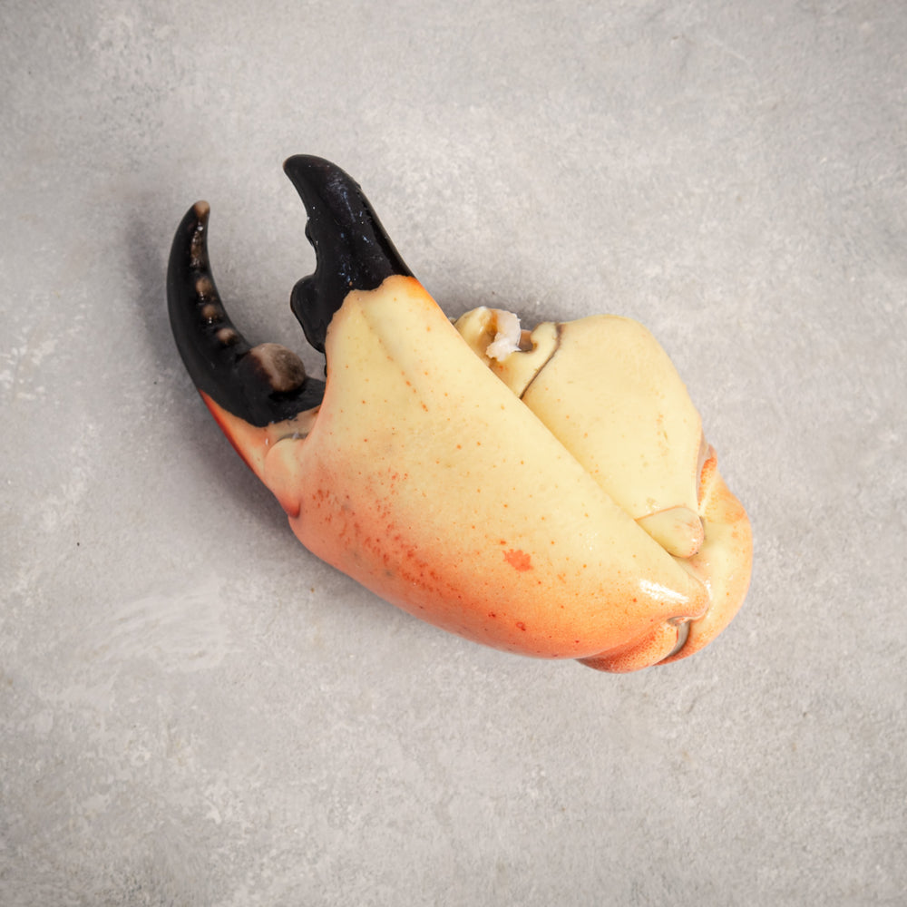 Load image into Gallery viewer, Stone Crab Claws Jumbo