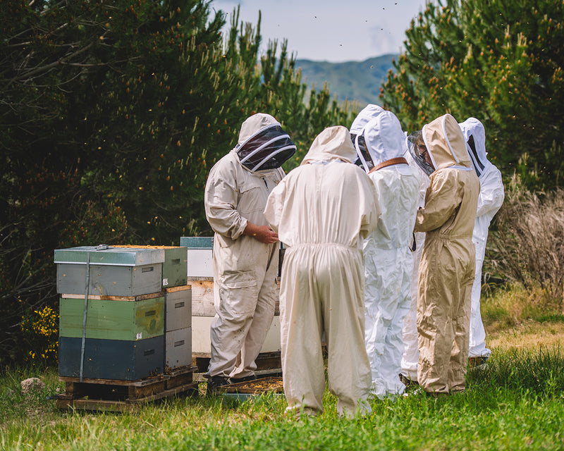 Putake Queen Co New Zealand Leading global supplier of Queen bees to the apicultural industry