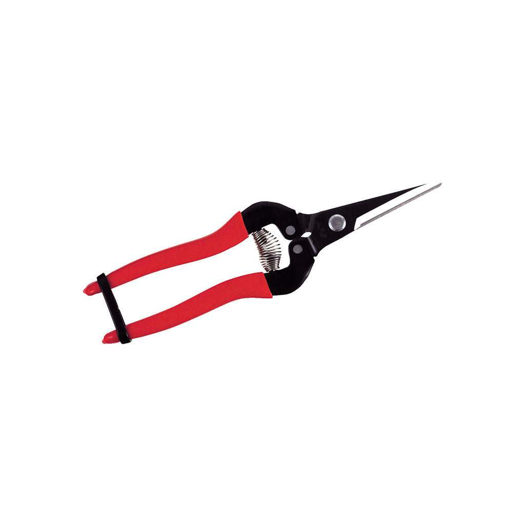 Needlenose Pruner