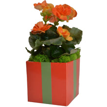 Load image into Gallery viewer, FlowerBox 4in Cube, Tangerine Tango