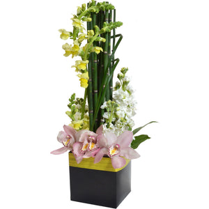 FlowerBox 5.5in Cube, Black