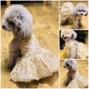 Dog wearing Princess Pet Embroidered Wedding Dress