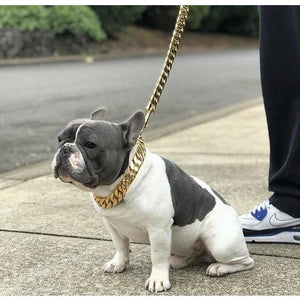 14K PVD Gold Plate Kilo Cuban Link Collar and Leash