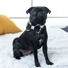 Load image into Gallery viewer, Suede_Silver Collar Bow Tie Set on Pug