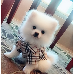 Furberry Checkered Button Up | Dog Clothing
