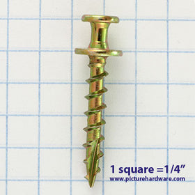 SA12 - 50 Pack - Bear Claw Gold Screws