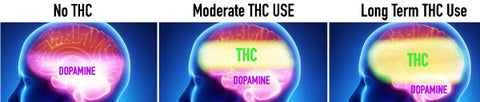 Long term cannabis use can deplete dopamine production and have negative effects such as amotivation.  Sometimes its best to take a tolerance break to allow the brain to return to normal dopamine production.