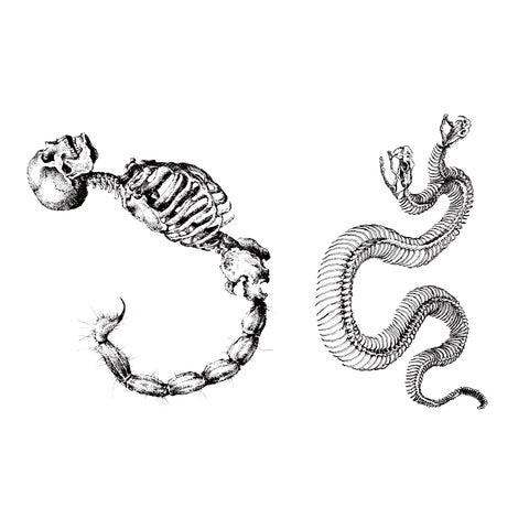 Scorpion and Snake Skeleton