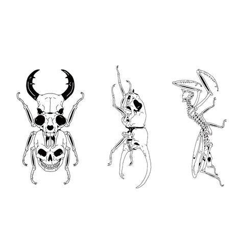 Rhinoceros Beetle Animal Insect Skull