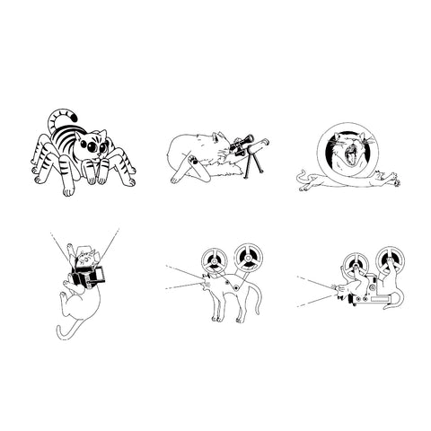 Spider Cat Designs