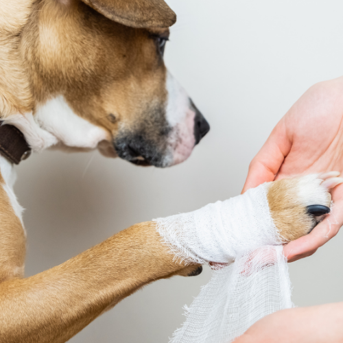 Cuts and scrapes? When to seek help from your vet.